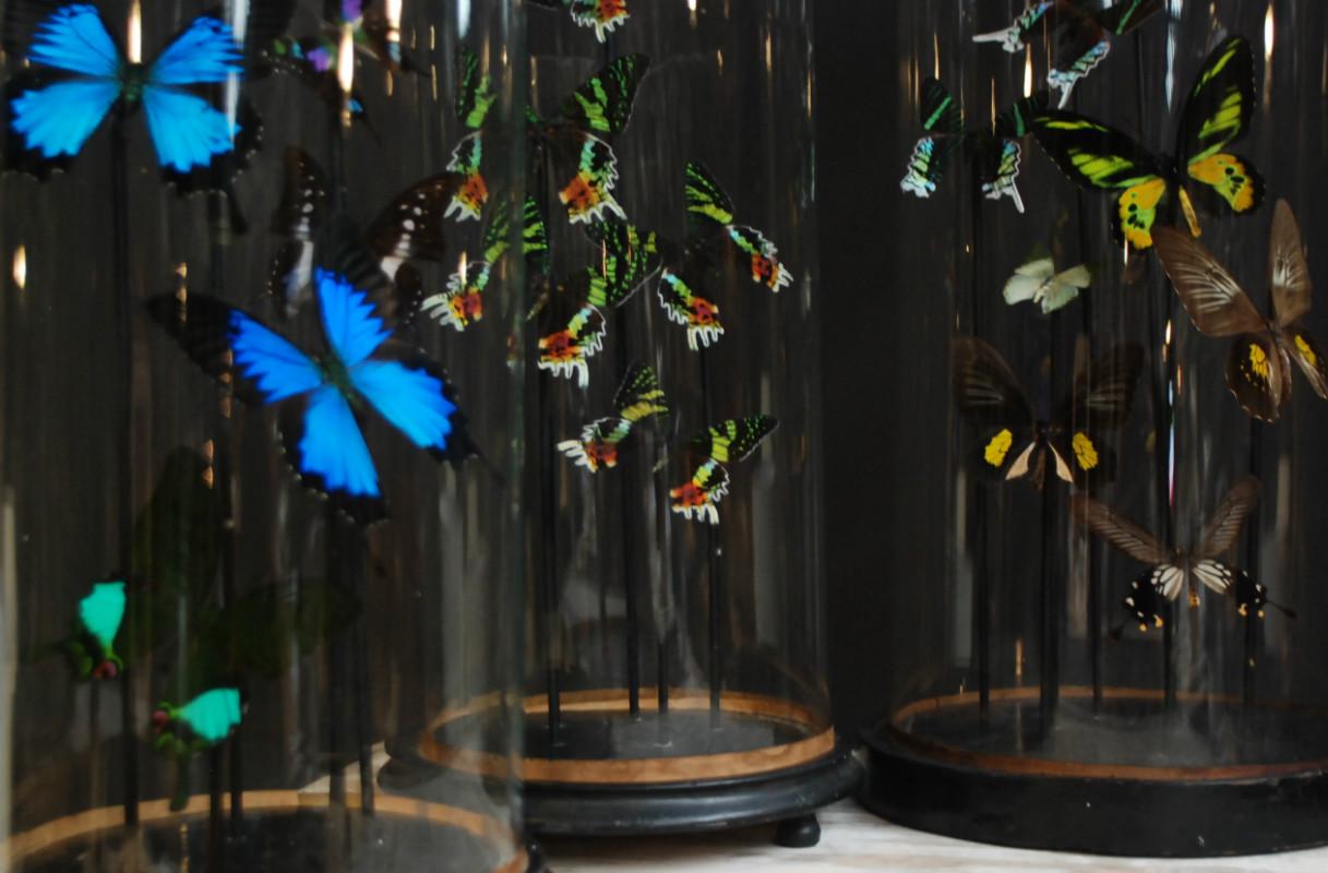 Spiksplinternieuw Opgezette vlinders, kevers, insecten onder antieke stolp - De Jong KA-78